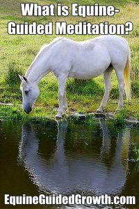 equine guided meditation