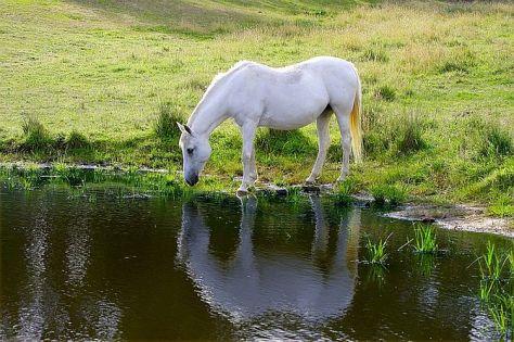 equine guided meditation workshops