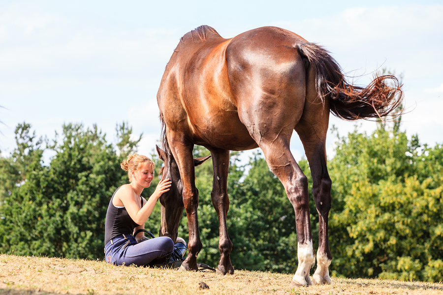 Learn to Meditate with Horses