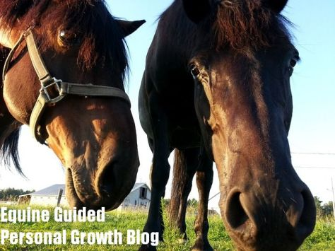 Equine Guided Personal Growth Blog