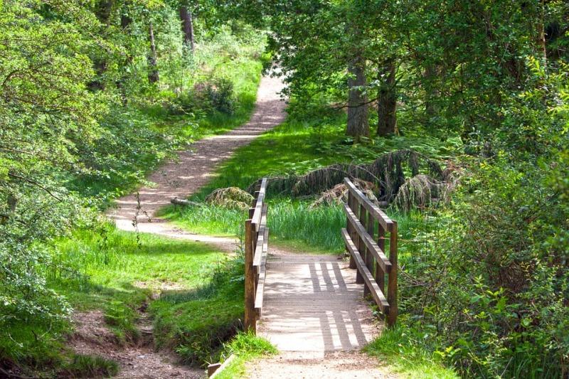 Garden Pathway Ideas Walking Paths Landscapes
