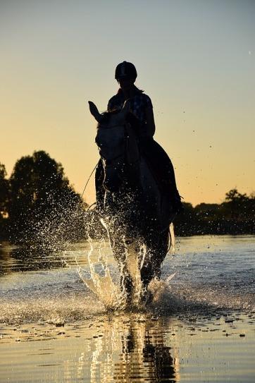horse-1722428_960_720